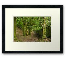 Lake District Woodland Path at Orrest Head Framed Print