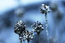 Waiting for Spring (blue 1) by Bob Daalder
