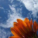 Orange flower reaching up by Chanzz