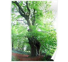 Faerie Tree Poster