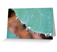 Cabbage Dew Drops Greeting Card