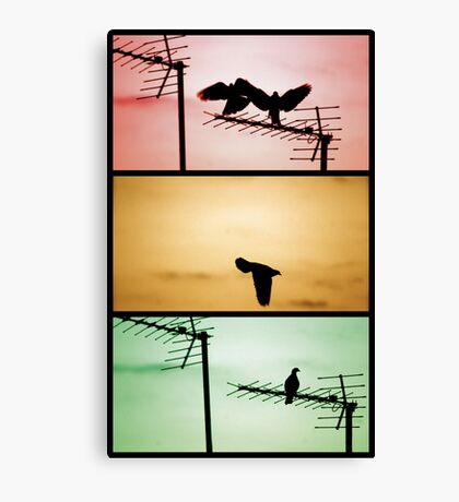 And then there was one. Canvas Print