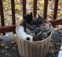 Basketfull by Susan Vinson