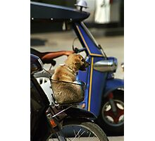 Moped dog Photographic Print