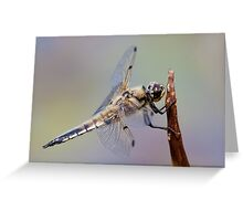 Four Spot Chaser Greeting Card
