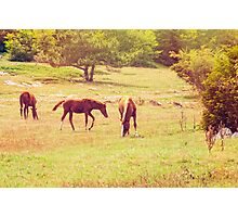 Walk along the high plains Photographic Print