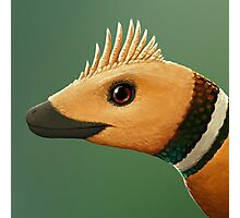 Jinfengopteryx Photographic Print