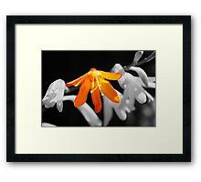 Flower close up Framed Print