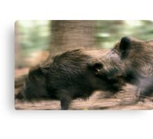 Biting boars Canvas Print
