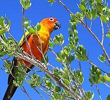 Pretty Polly by pinky763