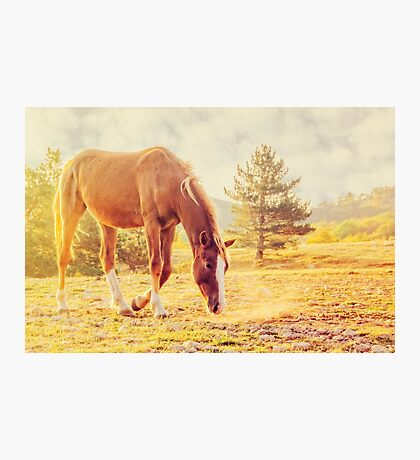 Acquaintance Photographic Print