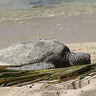 Sunbathing with a friend by Joni  Rae