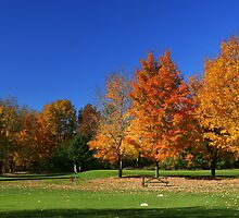 Great Fall Day On The Course! by AliceMc