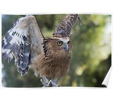 Buffy Fish Owl Poster