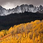 Aspens, Pines, Mountains, Uncompahgre National Forest, Colorado by Mark Bergman