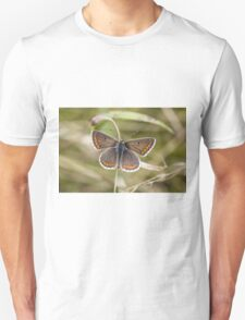 Brown Argus T-Shirt