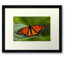 Monarch Butterfly - 11 Framed Print