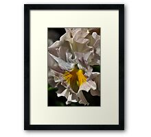 Pansy With a Golden Heart Framed Print