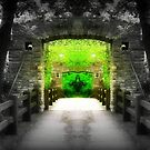 Enter Paradise © by Dawn M. Becker