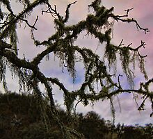 Moss Hanging From Tree by Renee D. Miranda