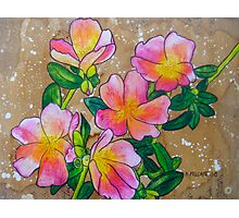 Pink Rock Roses ~ A Collaboration Photographic Print