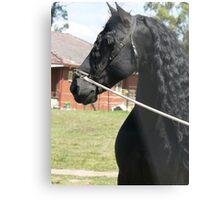 Wizzard - proud stallion Metal Print