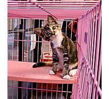 Hello Kitty Photographic Print