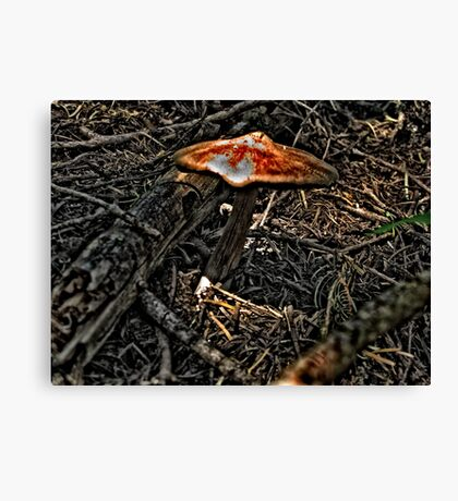 Toadstool In The Sun Canvas Print