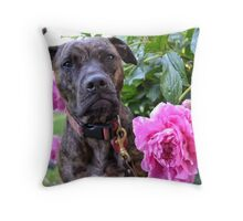 Ember- The Former Shelter Pitbull Throw Pillow