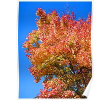 Autumn Colors in Blue Sky Poster