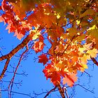 Rainbow Autumn Leaves in Blue by John Carpenter