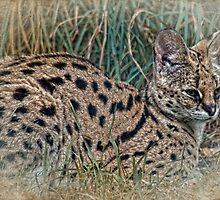 The Spirit of the Serval by Selina Ryles