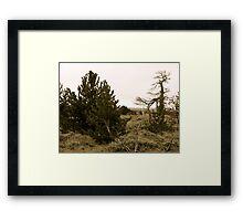 Medicine Bow Christmas Tree #1 Framed Print