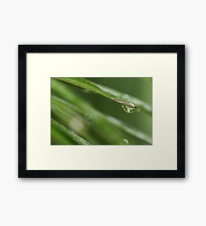 """""""Evergreen"""" Framed Print"""