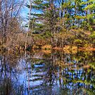 Reflections in a Pool by ECH52