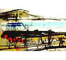 vineyard facing the bay #5 Photographic Print