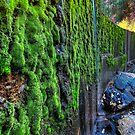 Damn Algae by Bob Larson