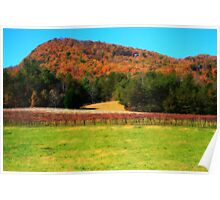 Country Vineyard Poster