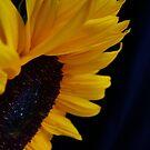 Bright & Beautiful by Sue Cotton