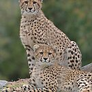 Brothers by Brad Francis