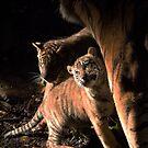 Binjai and 2 of her babies - Rani & Hutan by Brad Francis