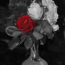 The red Rose by julie anne  grattan