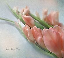 Two Peach Gladioli by Jean Turner