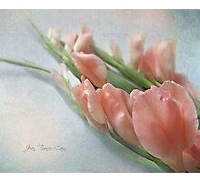Two Peach Gladioli Photographic Print