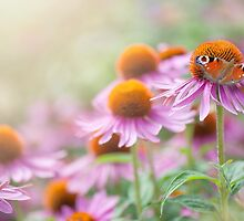 Butterfly & Coneflowers by Jacky Parker