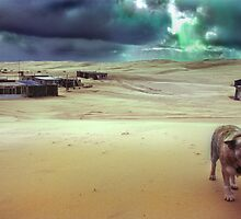 Tin City Dog, New South Wales, Australia by Andrew Brooks