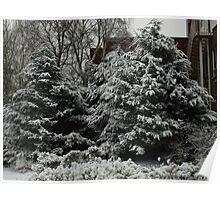 snow laden Poster