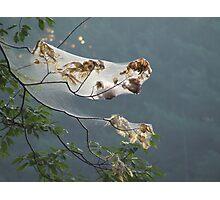 morning cobweb Photographic Print