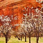 Orchard, Capitol Reef by Rachael  Talibart