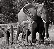 Baby Elephants by Nigel Ivy